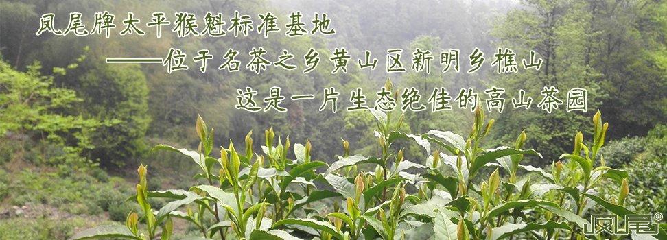 凤尾牌太平猴魁标准基地